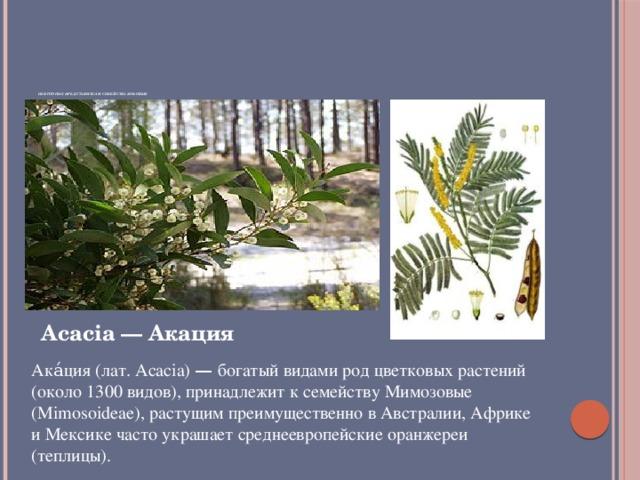 Некоторые представители семейства Бобовые   Acacia — Акация Ака́ция (лат. Acacia) — богатый видами род цветковых растений (около 1300 видов), принадлежит к семейству Мимозовые (Mimosoideae), растущим преимущественно в Австралии, Африке и Мексике часто украшает среднеевропейские оранжереи (теплицы).
