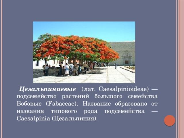 Цезальпиниевые  ( (Caesalpinioideae) )            Цезальпиниевые (лат. Caesalpinioideae) — подсемейство растений большого семейства Бобовые (Fabaceae). Название образовано от названия типового рода подсемейства — Caesalpinia (Цезальпиния).