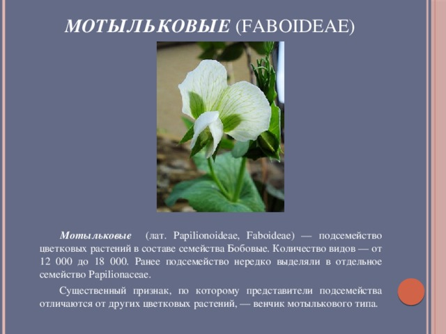 Мотыльковые (Faboideae)              Мотыльковые (лат. Papilionoideae, Faboideae) — подсемейство цветковых растений в составе семейства Бобовые. Количество видов — от 12 000 до 18 000. Ранее подсемейство нередко выделяли в отдельное семейство Papilionaceae.  Существенный признак, по которому представители подсемейства отличаются от других цветковых растений, — венчик мотылькового типа.