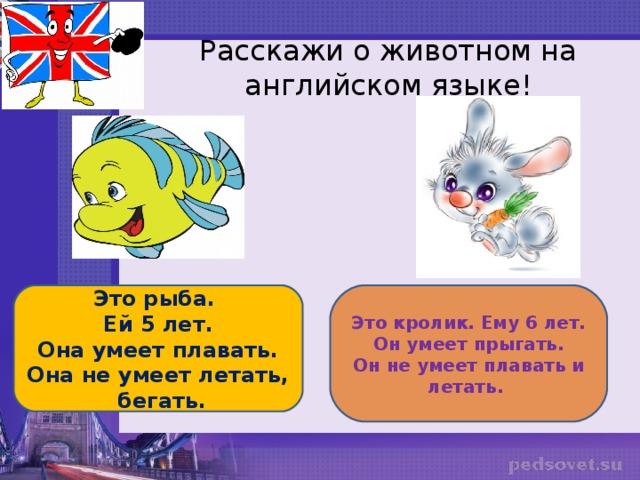 Расскажи о животном на английском языке! Это рыба. Ей 5 лет. Она умеет плавать. Она не умеет летать, бегать. Это кролик. Ему 6 лет. Он умеет прыгать. Он не умеет плавать и летать.