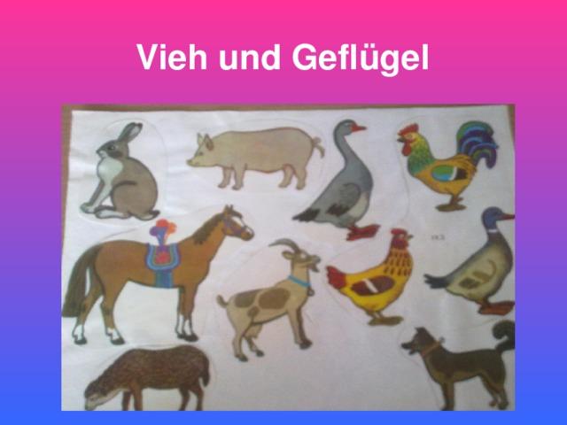Vieh  und  Geflügel