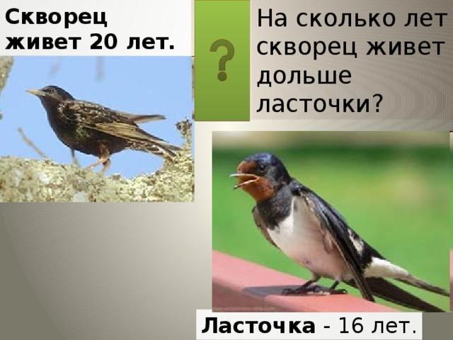 На сколько лет скворец живет дольше ласточки? Скворец живет 20 лет. Ласточка - 16 лет.