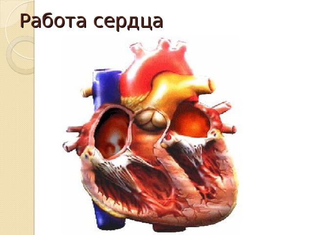 Ответы Mail.ru: как регулируется работа сердца?