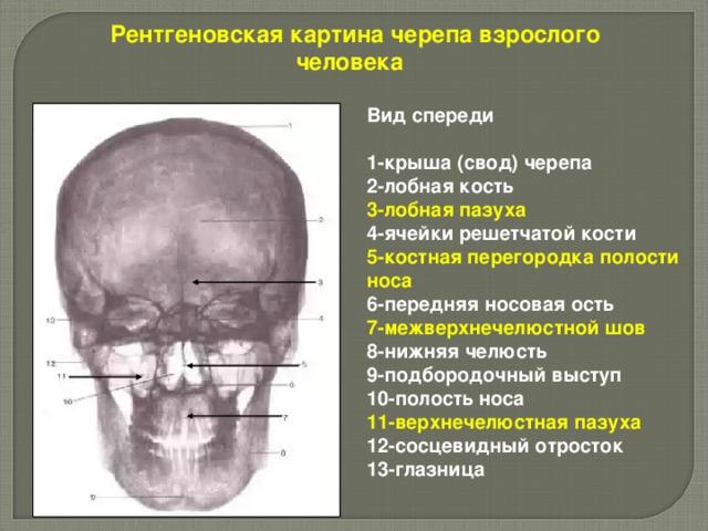 Рентгеновская картина черепа взрослого человека  Вид спереди   1-крыша (свод) черепа 2-лобная кость 3-лобная пазуха  4-ячейки решетчатой кости 5-костная перегородка полости носа 6-передняя носовая ость 7-межверхнечелюстной шов  8-нижняя челюсть 9-подбородочный выступ 10-полость носа 11-верхнечелюстная пазуха  12-сосцевидный отросток 13-глазница