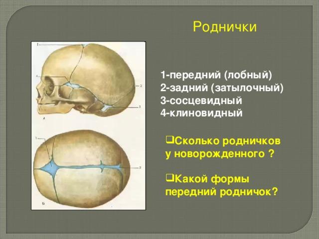 Роднички 1-передний (лобный) 2-задний (затылочный) 3-сосцевидный 4-клиновидный Сколько родничков у новорожденного ?