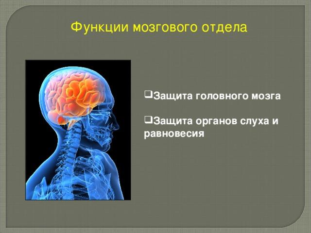 Функции мозгового отдела Защита головного мозга  Защита органов слуха и равновесия