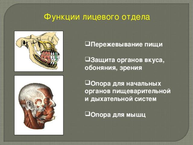 Функции лицевого отдела