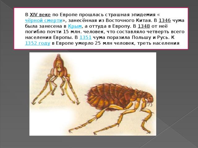 В XIV веке по Европе прошлась страшная эпидемия « чёрной смерти », занесённая из Восточного Китая. В 1346 чума была занесена в Крым , а оттуда в Европу. В 1348 от неё погибло почти 15млн. человек, что составляло четверть всего населения Европы. В 1351 чума поразила Польшу и Русь. К 1352 году в Европе умерло 25млн человек, треть населения