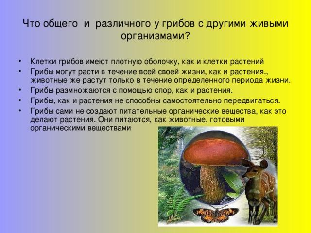 Что общего и различного у грибов с другими живыми организмами?