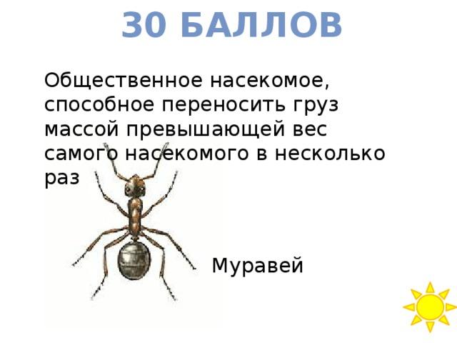 30 баллов Общественное насекомое, способное переносить груз массой превышающей вес самого насекомого в несколько раз Муравей