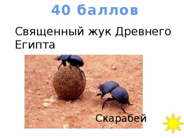 40 баллов Священный жук Древнего Египта Скарабей