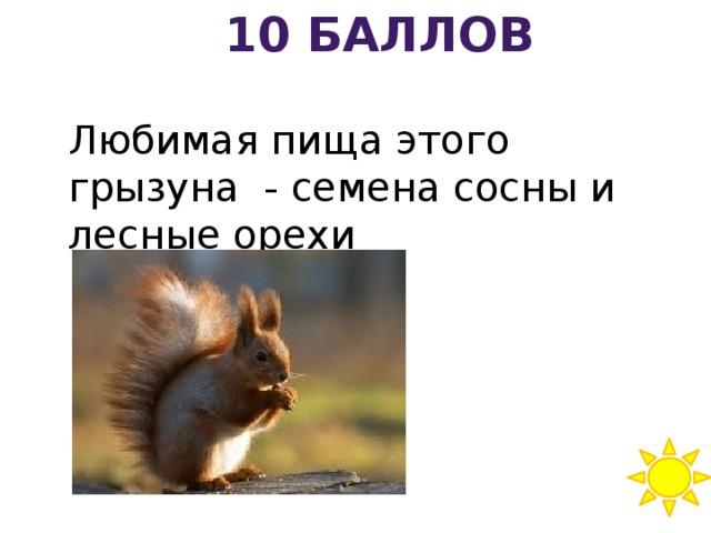 10 баллов Любимая пища этого грызуна - семена сосны и лесные орехи