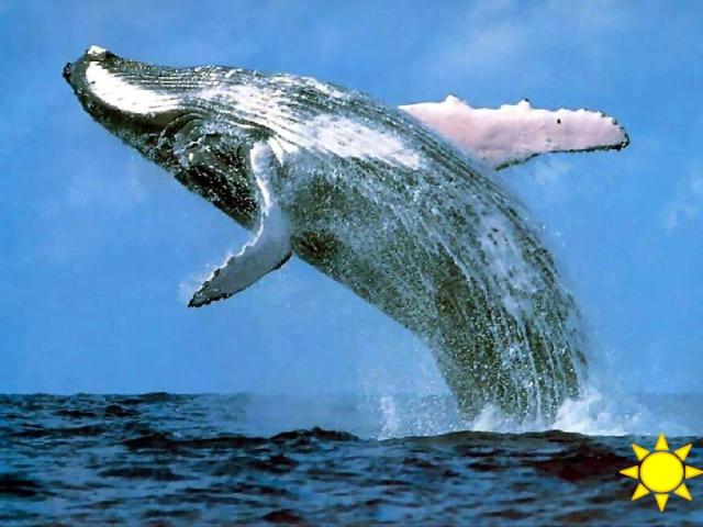 40 баллов Самое большое млекопитающее на Земле?