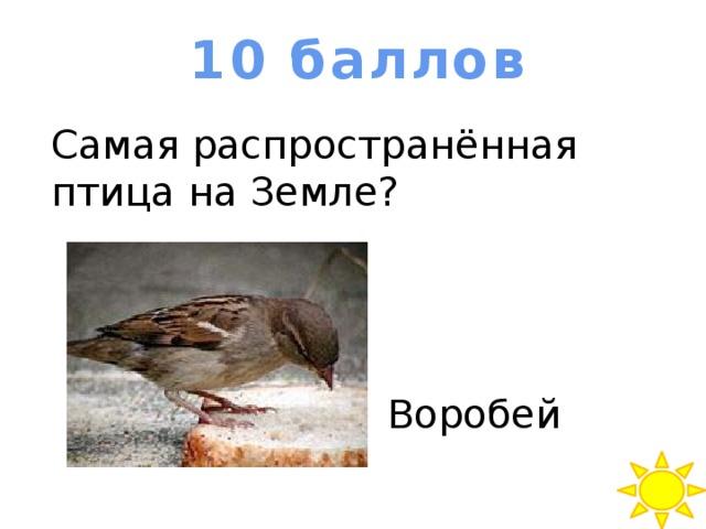 10 баллов Самая распространённая птица на Земле? Воробей