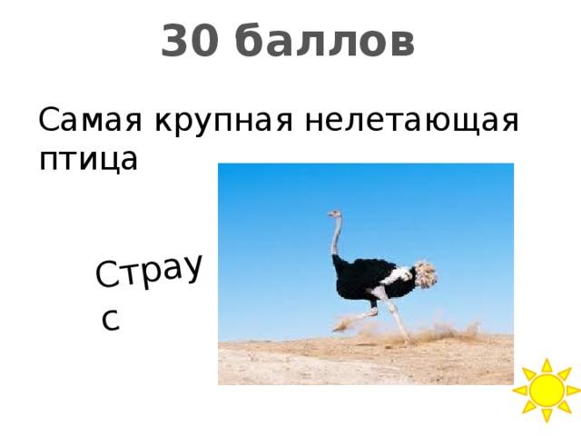 Страус 30 баллов Самая крупная нелетающая птица
