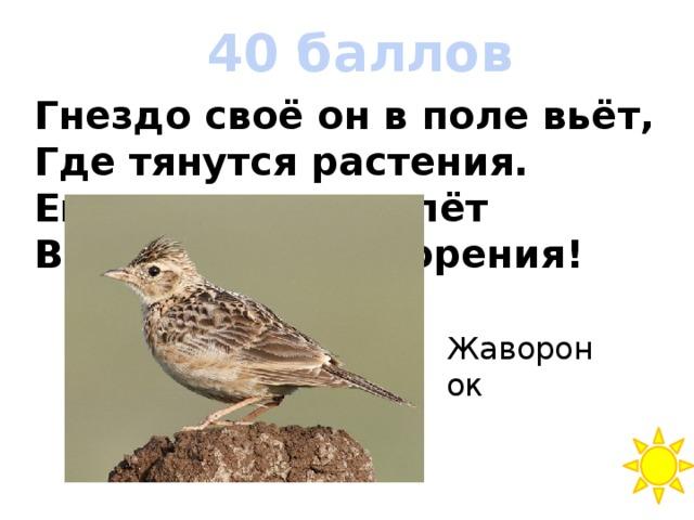 40 баллов Гнездо своё он в поле вьёт, Где тянутся растения. Его и песни, и полёт Вошли в стихотворения! Жаворонок