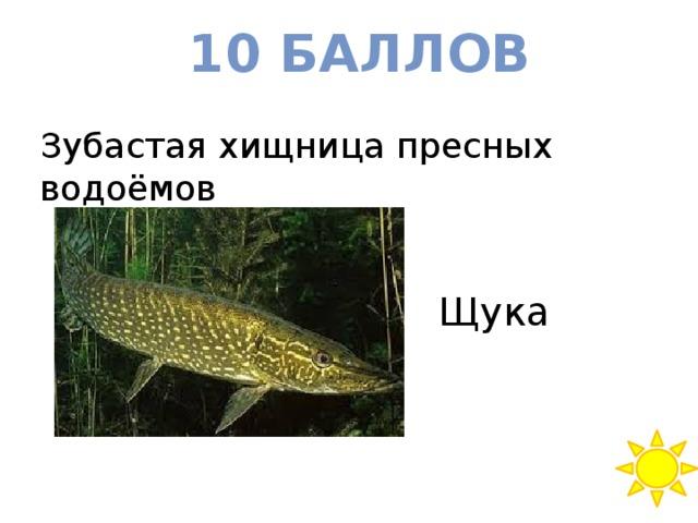 10 баллов Зубастая хищница пресных водоёмов Щука