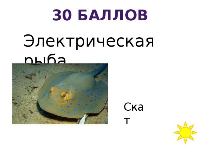 30 баллов Электрическая рыба Скат