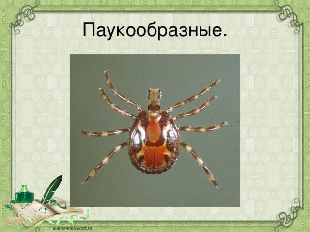 Паукообразные.