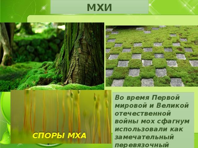 МХИ Во время Первой мировой и Великой отечественной войны мох сфагнум использовали как замечательный перевязочный материал. СПОРЫ МХА