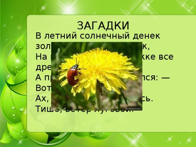 ЗАГАДКИ В летний солнечный денек золотой расцвел цветок,  На высокой тонкой ножке все дремал он у дорожки,  А проснулся — улыбнулся: — Вот пушистый я какой,  Ах, боюсь, что разлечусь. Тише, ветер луговой!