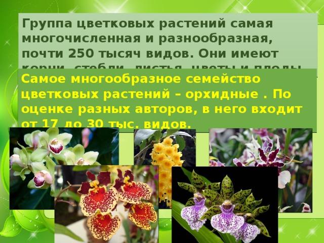 Группа цветковых растений самая многочисленная и разнообразная, почти 250 тысяч видов. Они имеют корни, стебли, листья, цветы и плоды. Самое многообразное семейство цветковых растений – орхидные . По оценке разных авторов, в него входит от 17 до 30 тыс. видов.
