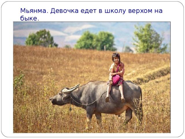 Мьянма. Девочка едет в школу верхом на быке.