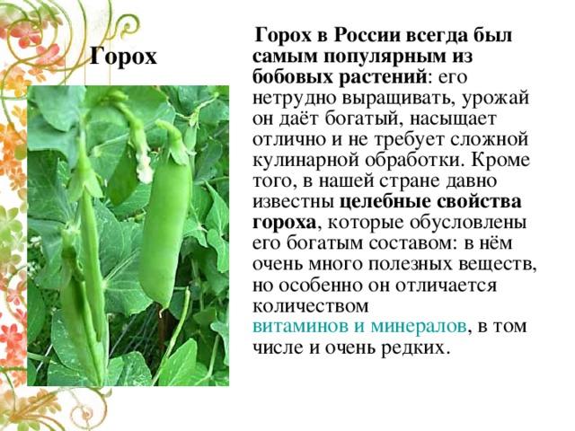 Горох  Горох в России всегда был самым популярным из бобовых растений : его нетрудно выращивать, урожай он даёт богатый, насыщает отлично и не требует сложной кулинарной обработки. Кроме того, в нашей стране давно известны целебные свойства гороха , которые обусловлены его богатым составом: в нём очень много полезных веществ, но особенно он отличается количеством витаминов и минералов , в том числе и очень редких.