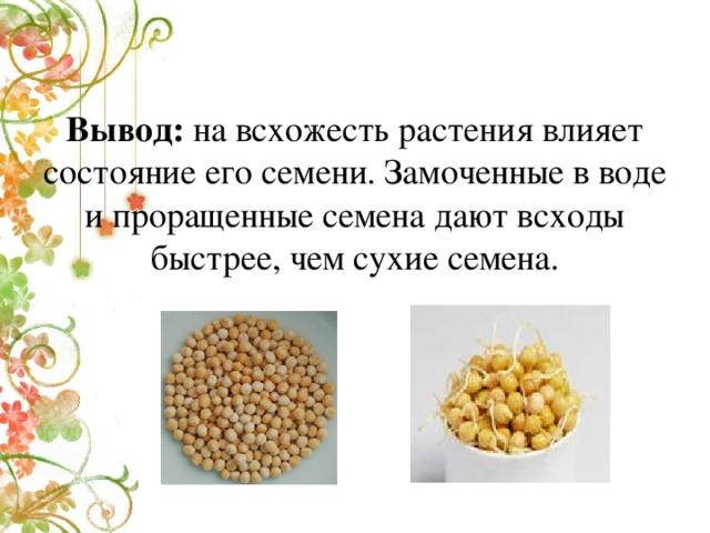 Вывод: на всхожесть растения влияет состояние его семени. Замоченные в воде и проращенные семена дают всходы быстрее, чем сухие семена.