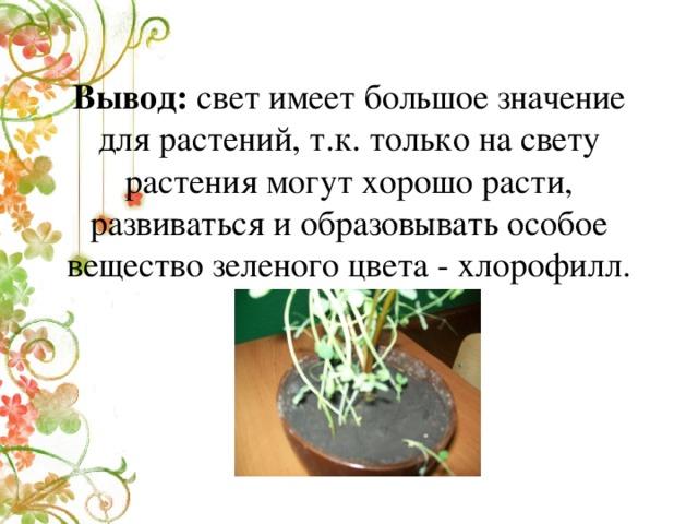 Вывод: свет имеет большое значение для растений, т.к. только на свету растения могут хорошо расти, развиваться и образовывать особое вещество зеленого цвета - хлорофилл.