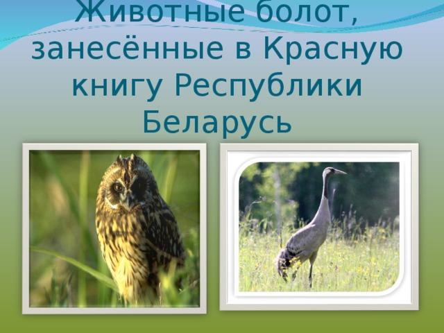 Животные красной книги беларуси в картинках с названиями