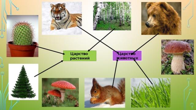 Царство животных Царство растений
