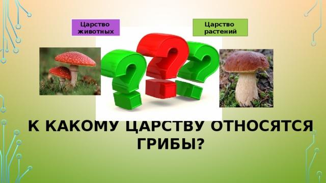 Царство Царство растений животных К какому царству относятся грибы?