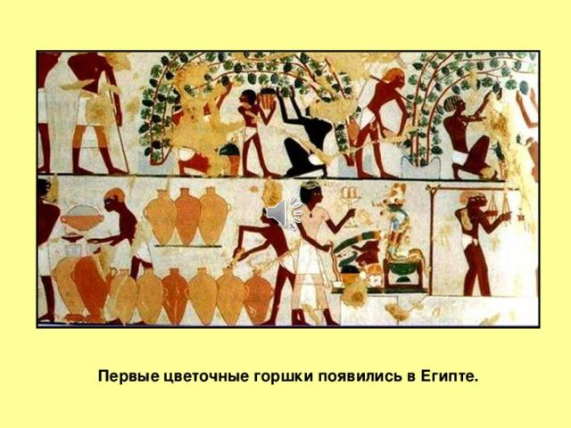 Слайд 1 Первые цветочные горшки появились в Египте.