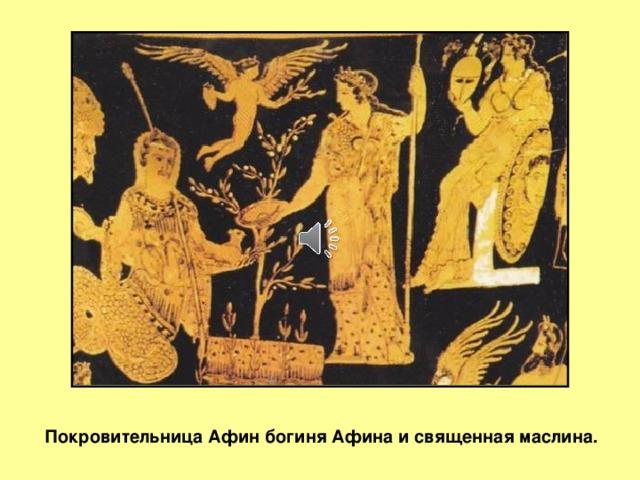 Слайд 2 Покровительница Афин богиня Афина и священная маслина.