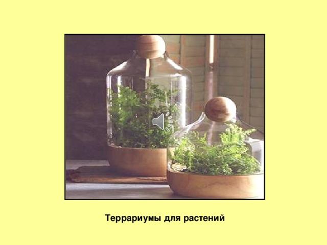 Слайд 5 Террариумы для растений