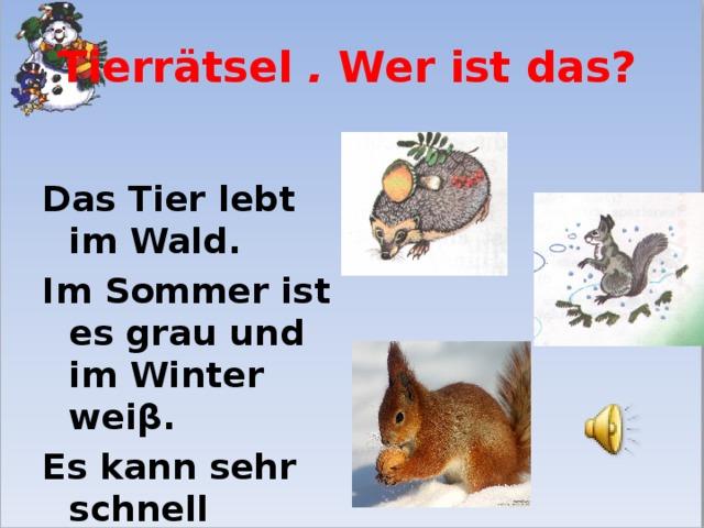 Tierr ätsel . Wer ist das?  Das Tier lebt im Wald. Im Sommer ist es grau und im Winter wei β. Es kann sehr schnell laufen.