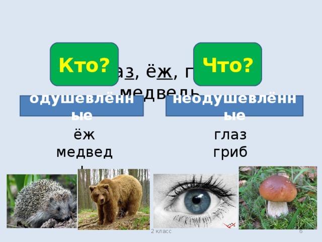 Кто? Что? Гла з , ё ж , гри б , медве дь . одушевлённые неодушевлённые ёж медведь глаз гриб 2 класс