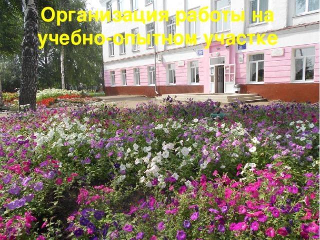 Организация работы на учебно-опытном участке