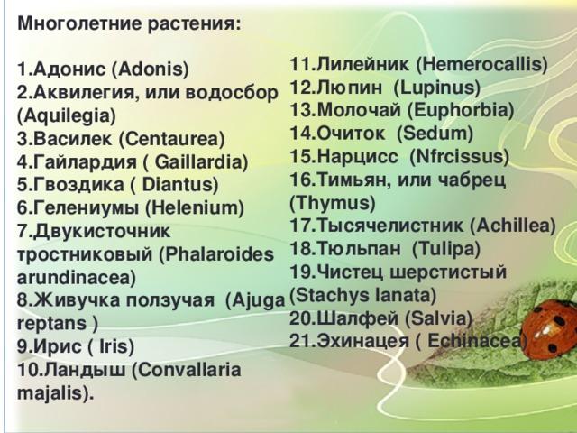 Многолетние растения:  1.Адонис (Adonis) 2.Аквилегия, или водосбор (Aquilegia) 3.Василек (Centaurea) 4.Гайлардия ( Gaillardia) 5.Гвоздика ( Diantus) 6.Гелениумы (Helenium) 7.Двукисточник тростниковый (Phalaroides arundinacea) 8.Живучка ползучая (Ajuga reptans ) 9.Ирис ( Iris) 10.Ландыш (Convallaria majalis).   11.Лилейник (Hemerocallis)  12.Люпин (Lupinus) 13.Молочай (Euphorbia) 14.Очиток (Sedum) 15.Нарцисс (Nfrcissus) 16.Тимьян, или чабрец (Thymus) 17.Тысячелистник (Achillea) 18.Тюльпан (Tulipa) 19.Чистец шерстистый (Stachys lanata) 20.Шалфей (Salvia) 21.Эхинацея ( Echinacea)