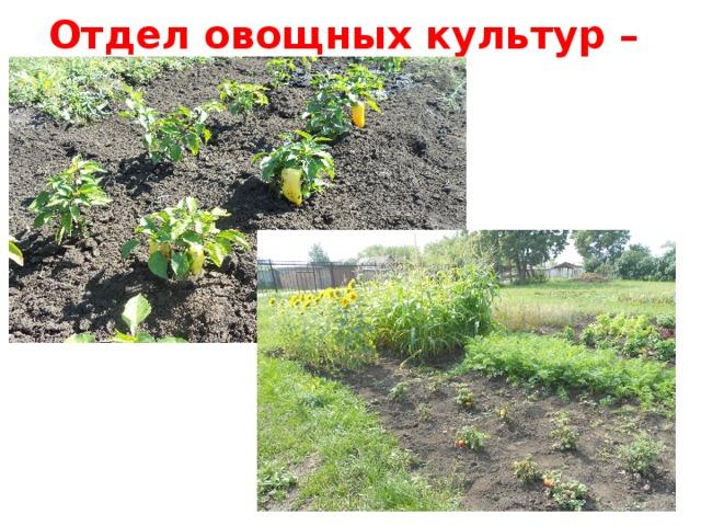 Отдел овощных культур – 12 м кв .