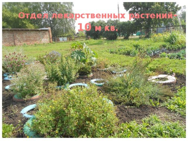Отдел лекарственных растений -10 м кв.