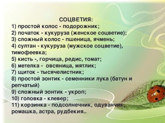 СОЦВЕТИЯ: 1) простой колос - подорожник; 2) початок - кукуруза (женское соцветие); 3) сложный колос - пшеница, ячмень; 4) султан - кукуруза (мужское соцветие), тимофеевка; 5) кисть -, горчица, редис, томат; 6) метелка - овсяница, мятлик; 7) щиток - тысячелистник; 8) простой зонтик - семенники лука (батун и репчатый) 9) сложный зонтик - укроп; 10) головка - клевер; 11) корзинка - подсолнечник, одуванчик, ромашка, астра, рудбекия..