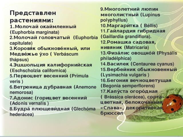 9. Многолетний люпин многолистный ( Lupinus polyphyllus) 10. Маргари́тка ( Béllis) 11. Гайлардия гибридная ( Gaillardia grandiflora). 12. Ромашка садовая, нивяник ( Matricaria) 13. Физа́лис овощно́й ( Physális philadélphica) 14. Василек ( Centaur е a cyanus) 15. Вербейник обыкновенный ( Lysimachia vulgaris ) 16. Бегония вечноцветущая ( Begonia semperflorens) 17. Капу́ста огоро́дная ( Brássica olerácea), сорта-цветная, белокочанная «Слава», декоративная, брюссел Представлен растениями: 1.Молочай окаймленный ( Euphorbia marginata) 2. Молочай головчатый ( Euphorbia capitulate) 3. Коровя́к обыкнове́нный, или Медве́жье у́хо ( Verbáscum thápsus) 4. Эшшольция калифорнийская ( Eschscholzia californica) 5. Первоцвет весенний ( Primula veris ) 6. Ветреница дубравная ( Anemone nemorosa) 7. Адонис (горицвет весенний ( Adonis vernalis ) 8. Будра́ плющеви́дная ( Glechóma hederácea)