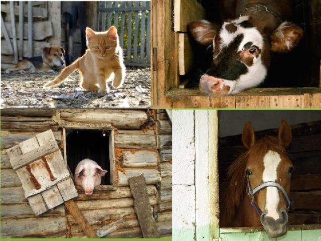 Где живут домашние животные?