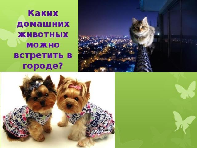 Каких домашних животных можно встретить в городе?
