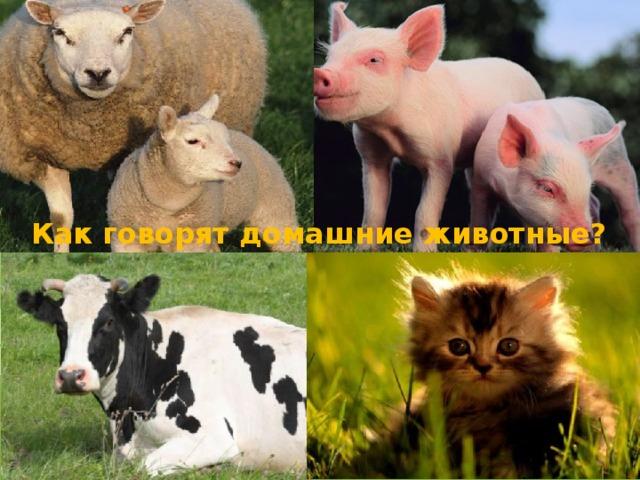 Как говорят домашние животные?