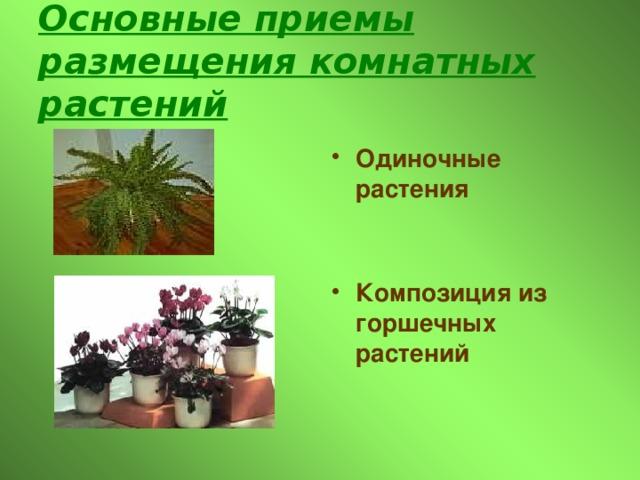 Основные приемы размещения комнатных растений Одиночные растения   Композиция из горшечных растений