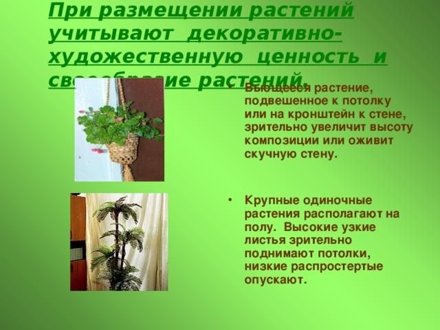 При размещении растений учитывают декоративно-художественную ценность и своеобразие растений. Вьющееся растение, подвешенное к потолку или на кронштейн к стене, зрительно увеличит высоту композиции или оживит скучную стену.