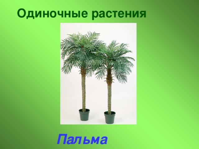 Одиночные растения Пальма